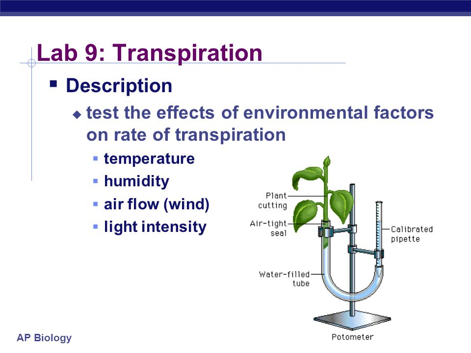 Lab 9: Transpiration Description