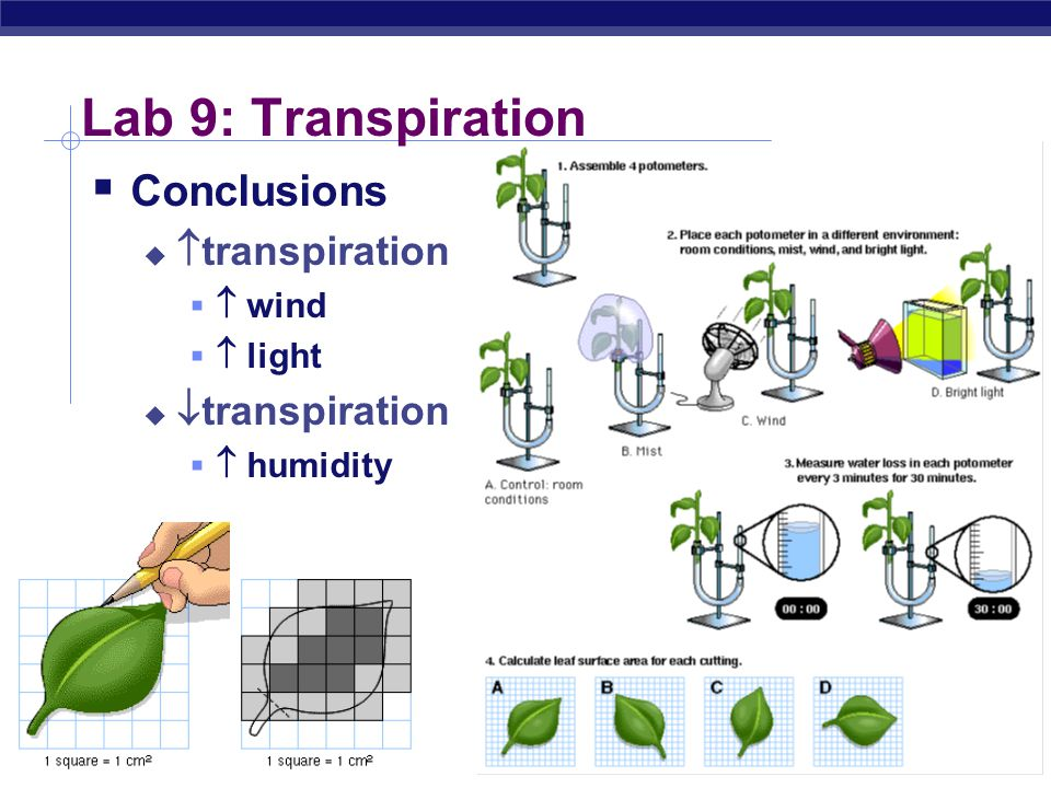 Lab 9: Transpiration Conclusions transpiration transpiration  wind