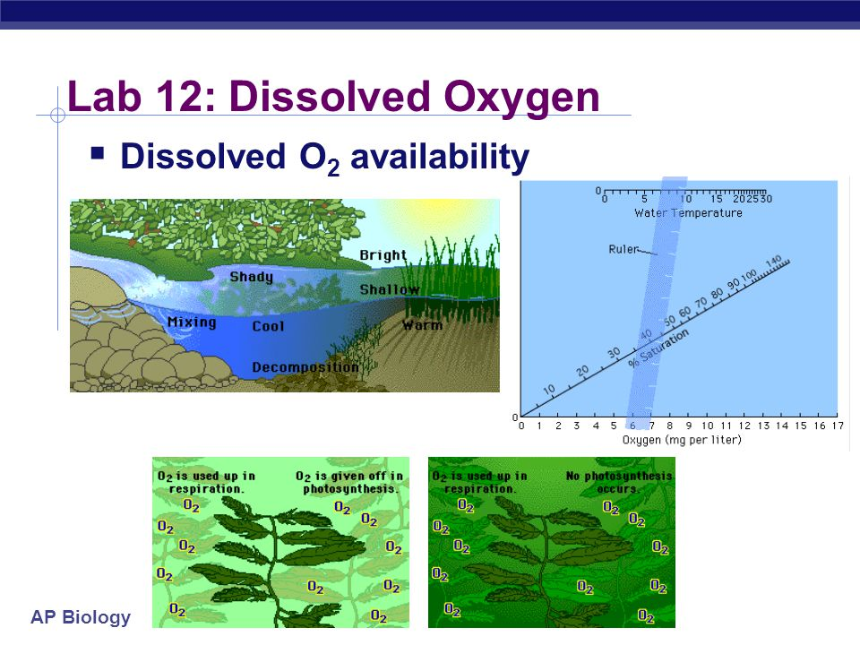 Lab 12: Dissolved Oxygen Dissolved O2 availability