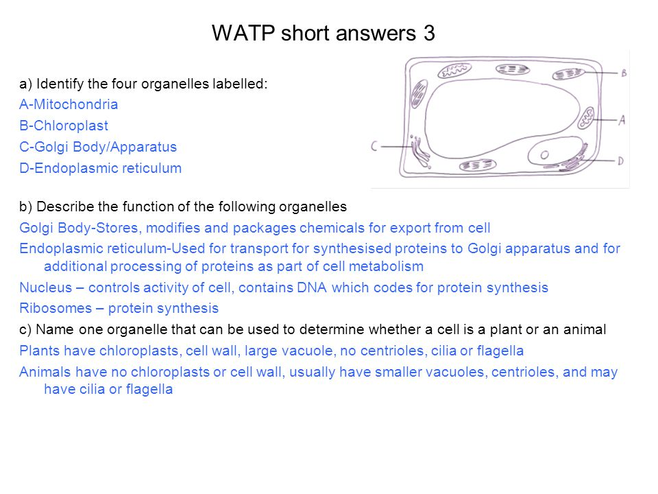 WATP short answers 3