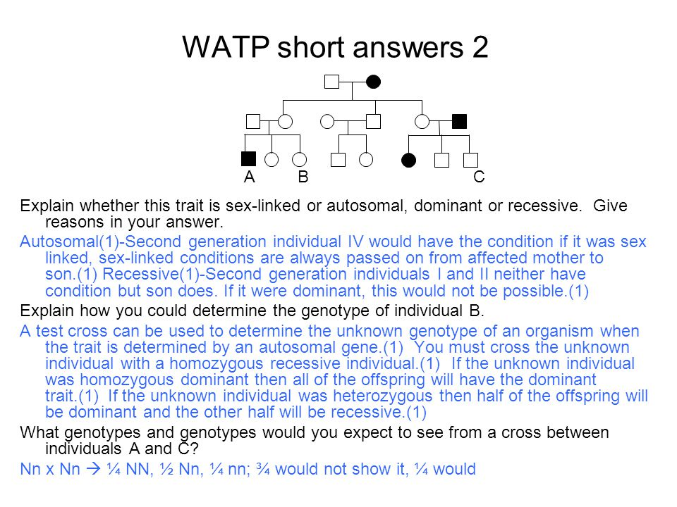 WATP short answers 2 A. B. C. Explain whether this trait is sex-linked or autosomal, dominant or recessive. Give reasons in your answer.