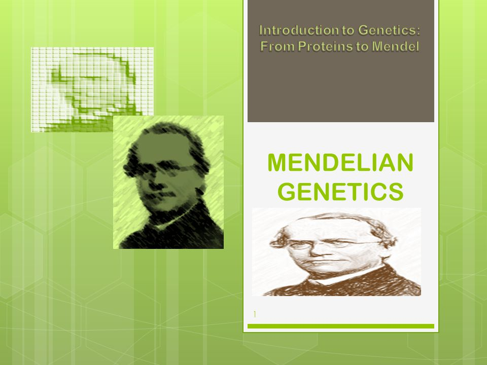 Introduction to Genetics: From Proteins to Mendel