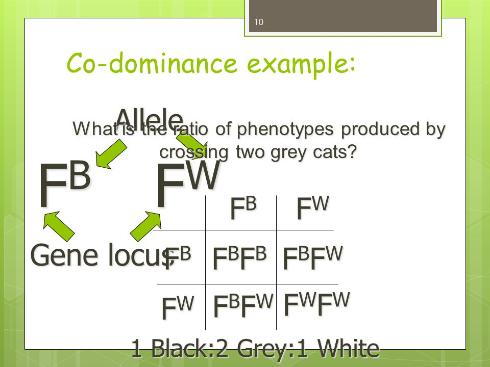 Co-dominance example: