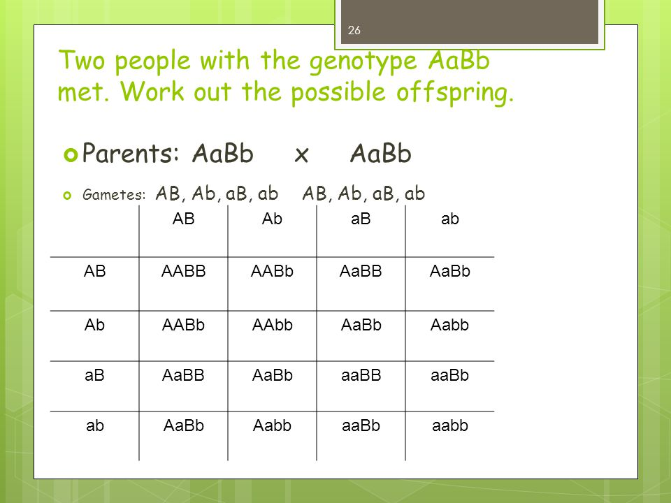 Two people with the genotype AaBb met. Work out the possible offspring.