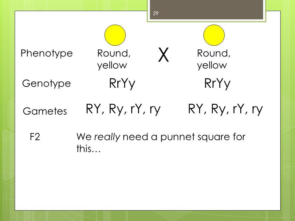 X RrYy RrYy RY, Ry, rY, ry RY, Ry, rY, ry Phenotype Round, yellow