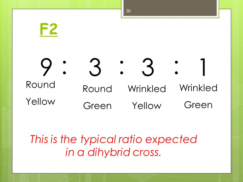 This is the typical ratio expected in a dihybrid cross.