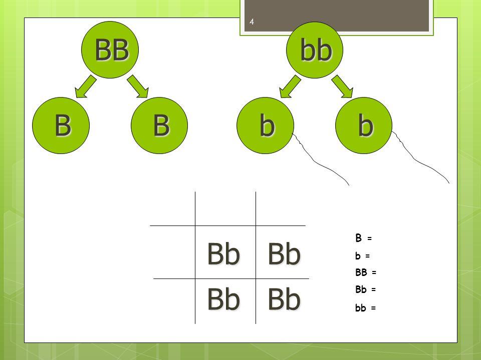 BB bb B B b b B = b = BB = Bb = bb = Bb Bb Bb Bb
