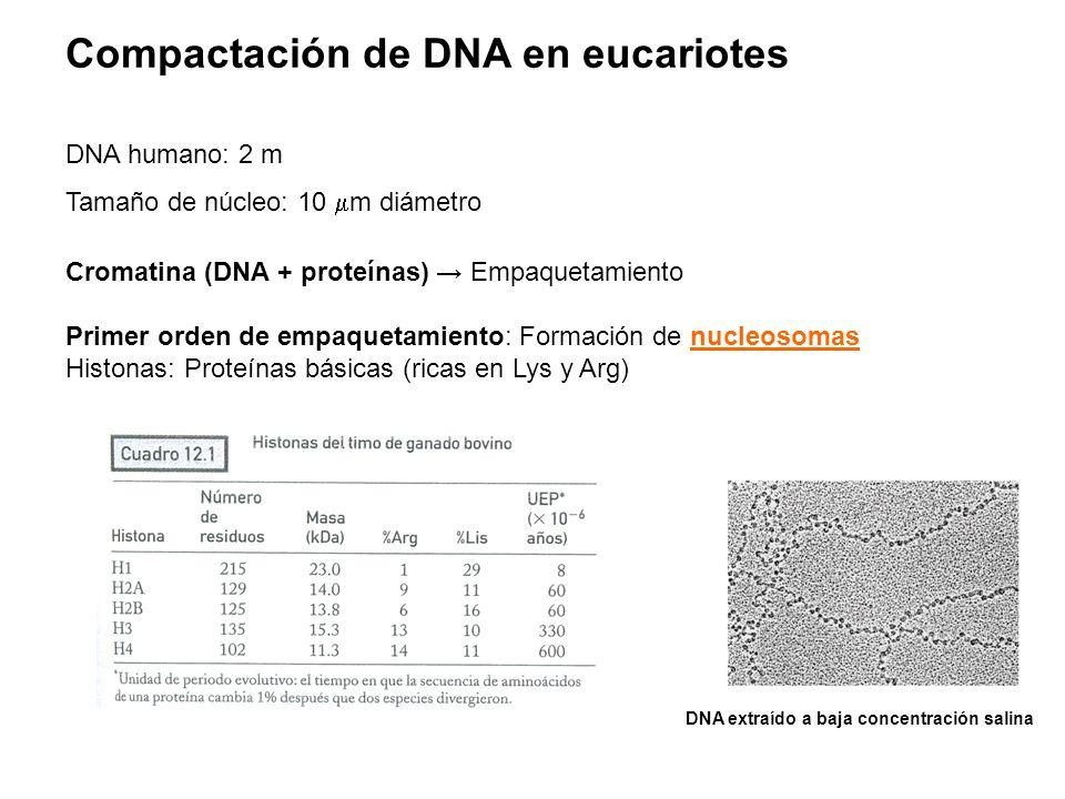 Compactación de DNA en eucariotes