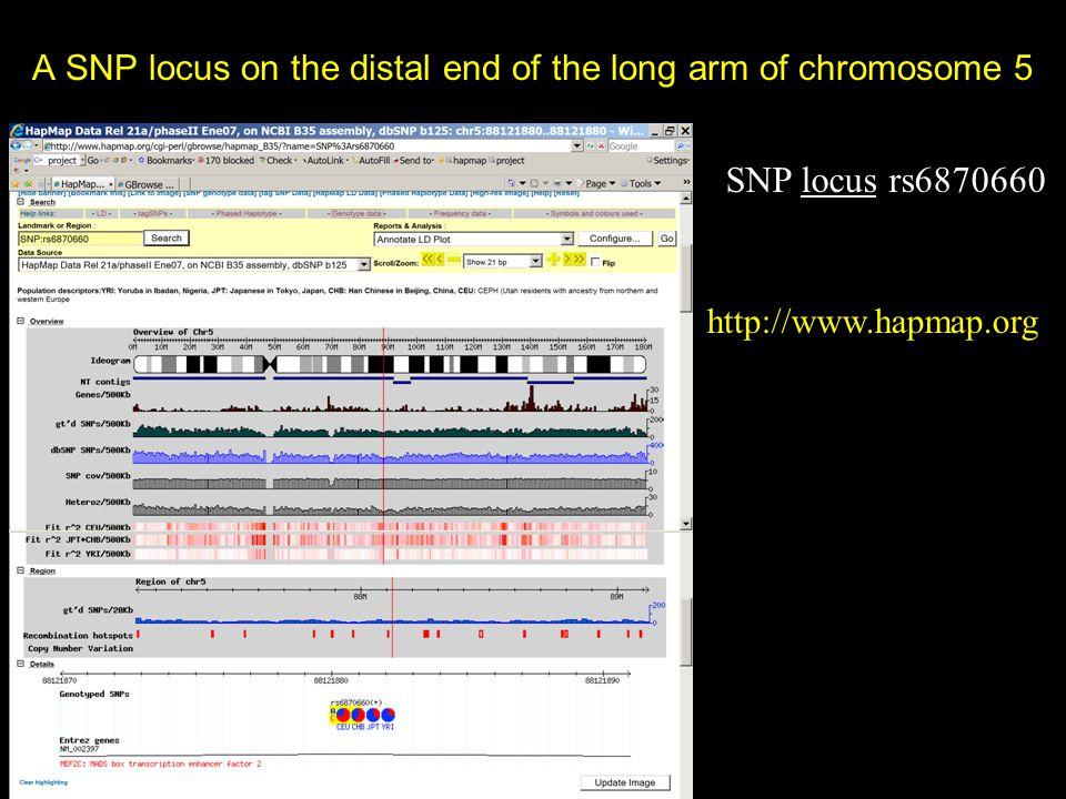 A SNP locus on the distal end of the long arm of chromosome 5