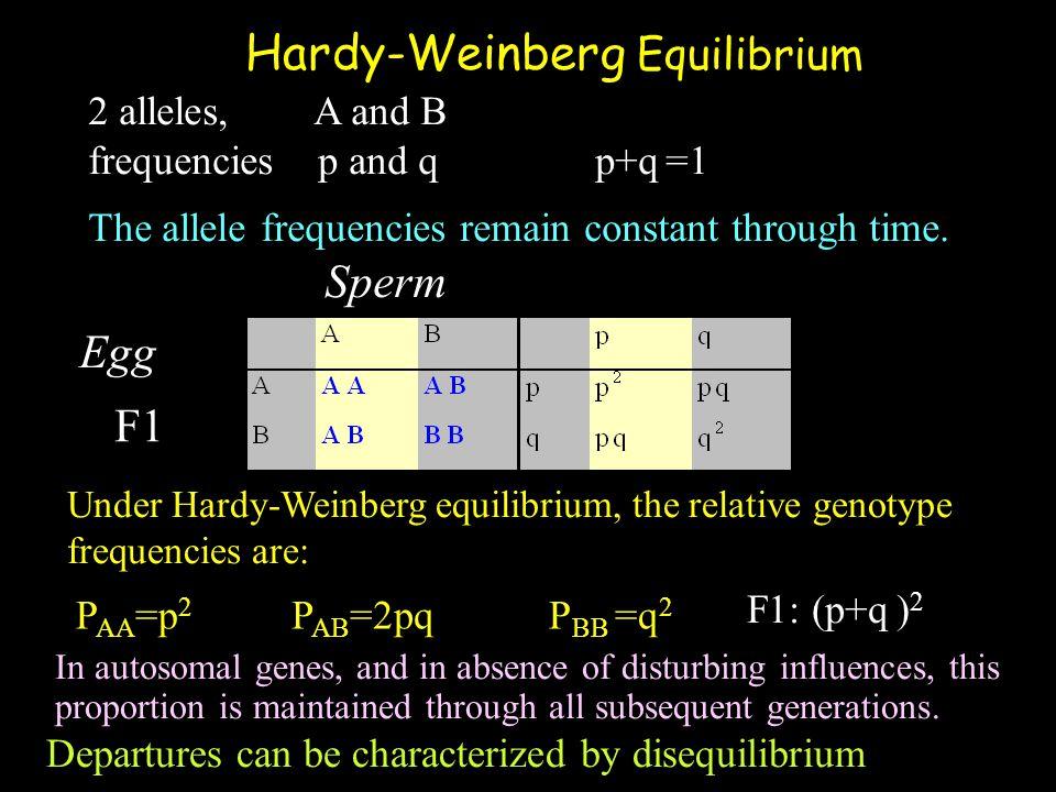 Hardy-Weinberg Equilibrium