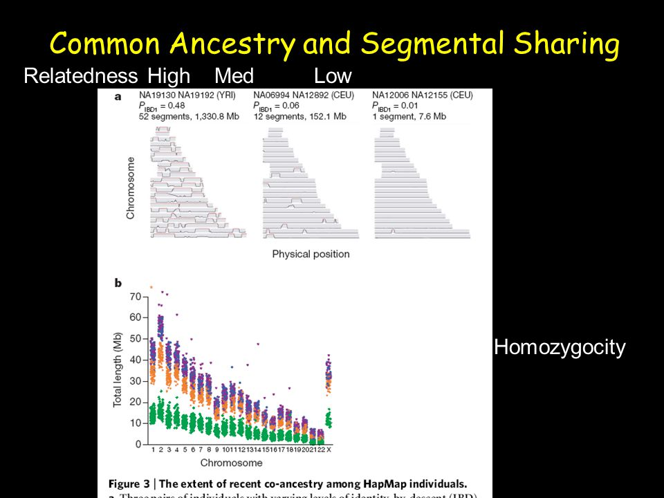 Common Ancestry and Segmental Sharing