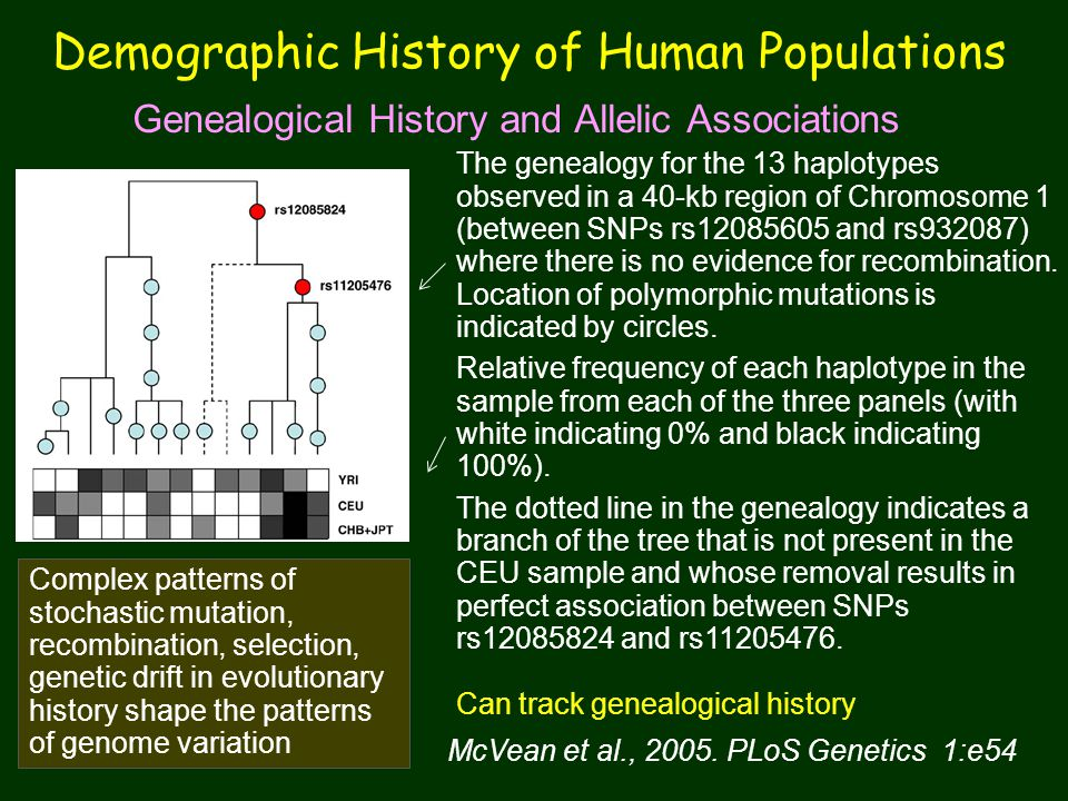 Demographic History of Human Populations
