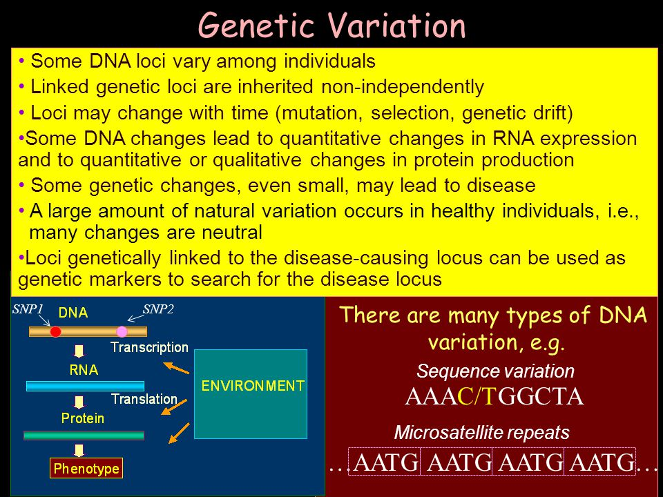 There are many types of DNA