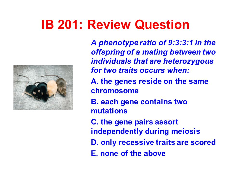 IB 201: Review Question