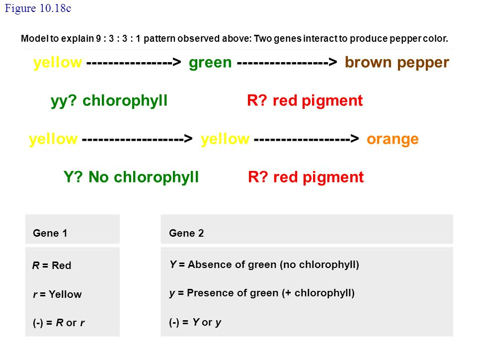 yellow ----------------> green -----------------> brown pepper
