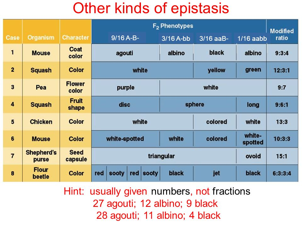 Other kinds of epistasis
