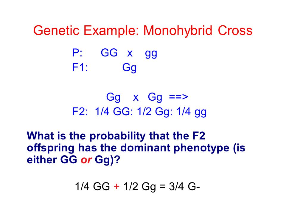 Genetic Example: Monohybrid Cross
