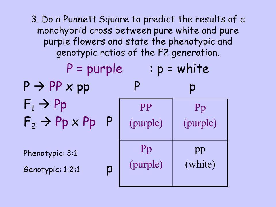 P = purple : p = white P  PP x pp P p F1  Pp F2  Pp x Pp P PP