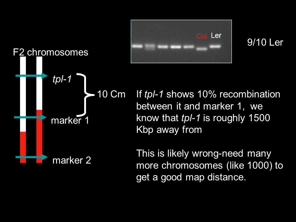 9/10 Ler tpl-1 marker 1 marker 2 F2 chromosomes 10 Cm