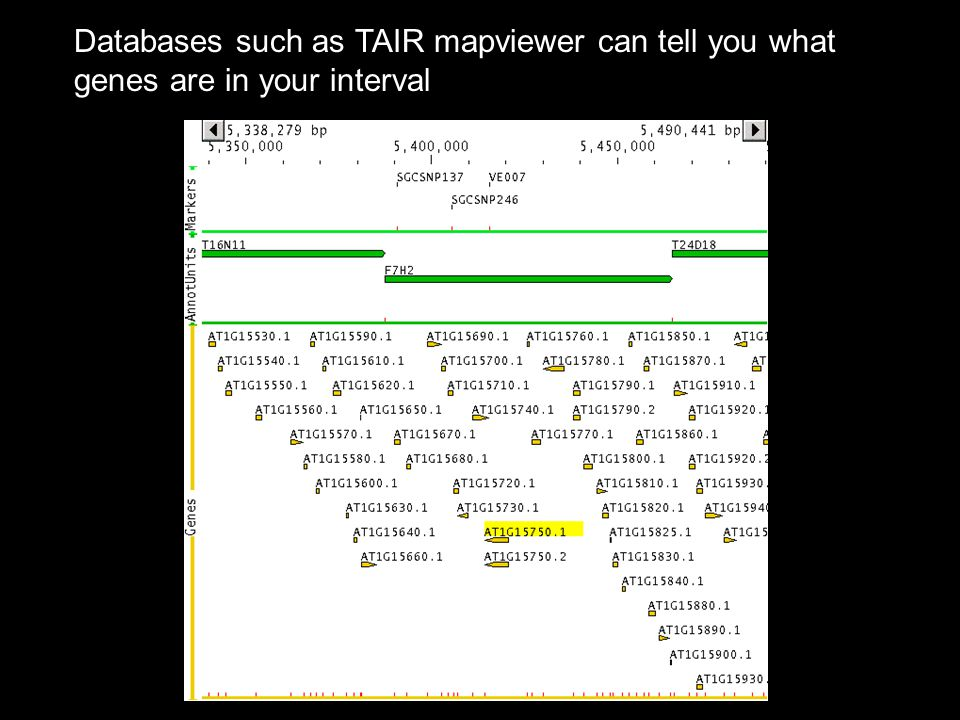 Databases such as TAIR mapviewer can tell you what