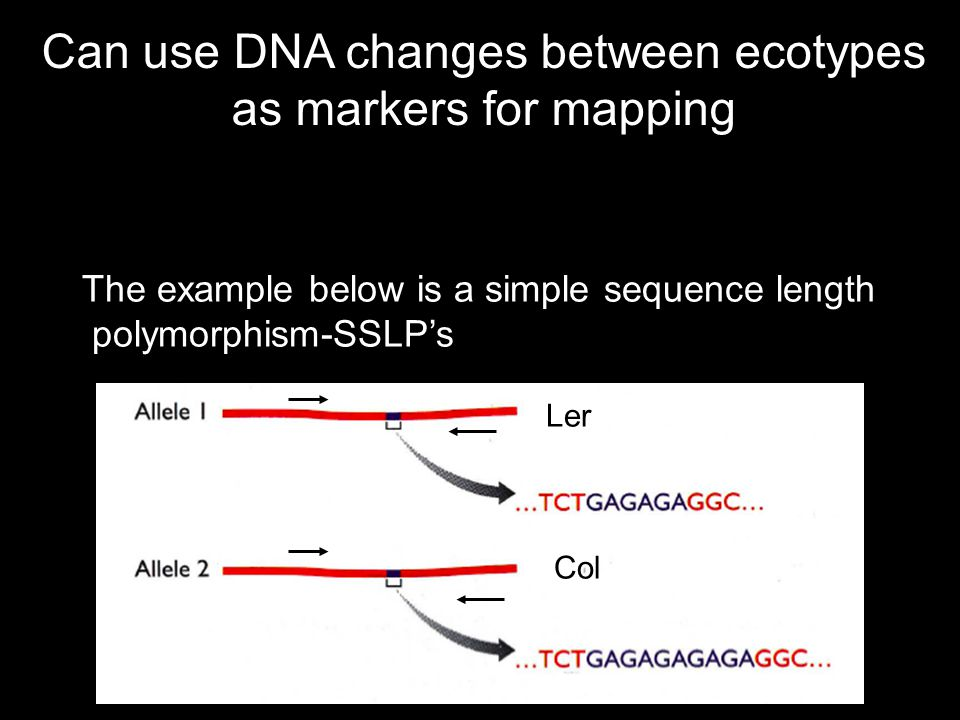 Can use DNA changes between ecotypes