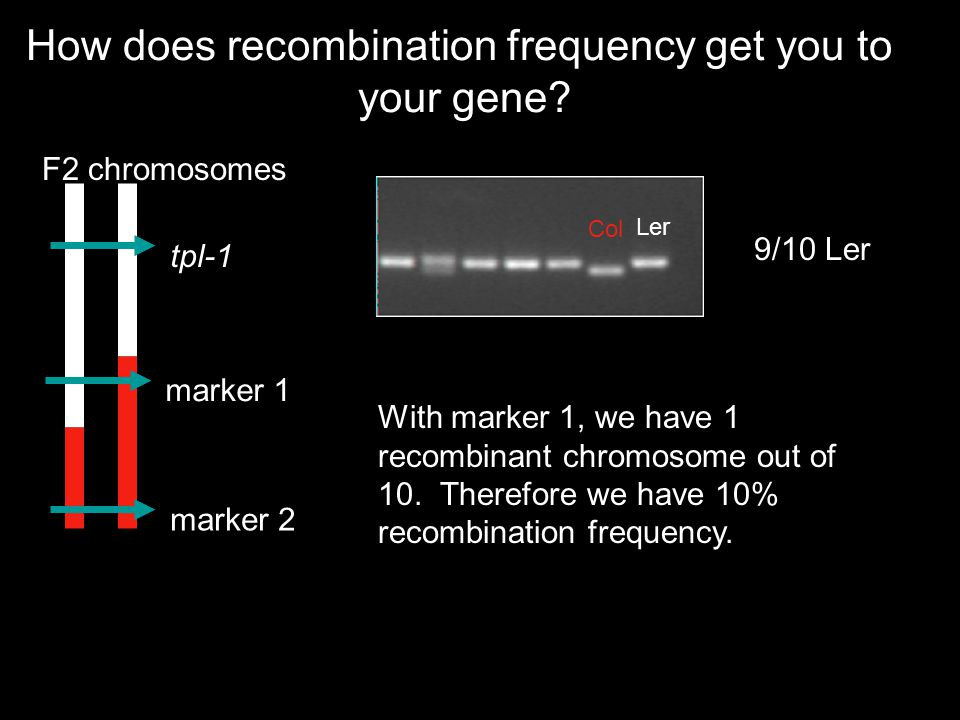 How does recombination frequency get you to