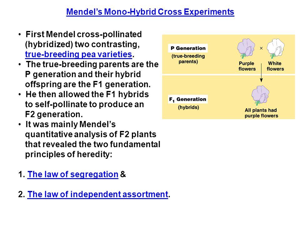 Mendel's Mono-Hybrid Cross Experiments