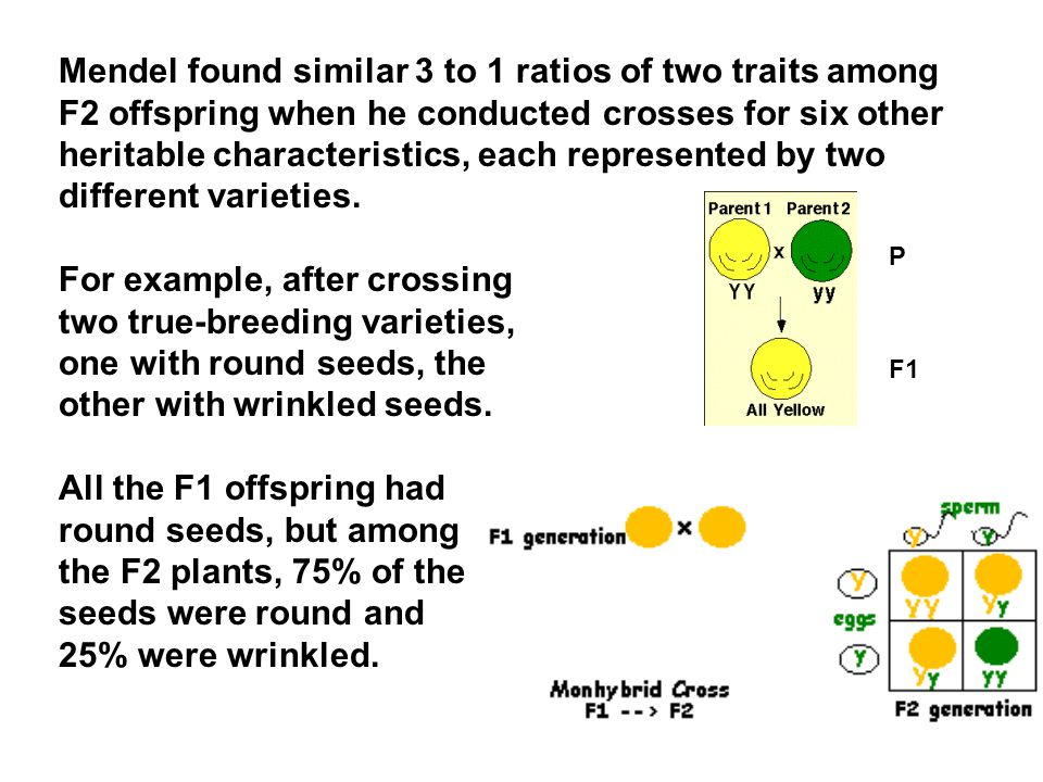 Mendel found similar 3 to 1 ratios of two traits among F2 offspring when he conducted crosses for six other heritable characteristics, each represented by two different varieties.