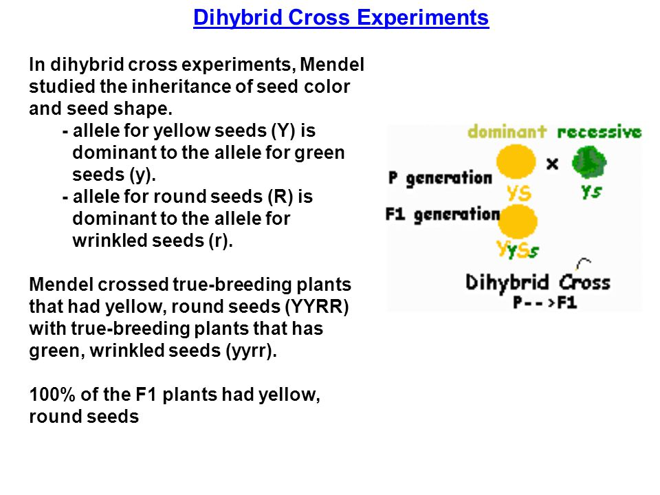 Dihybrid Cross Experiments