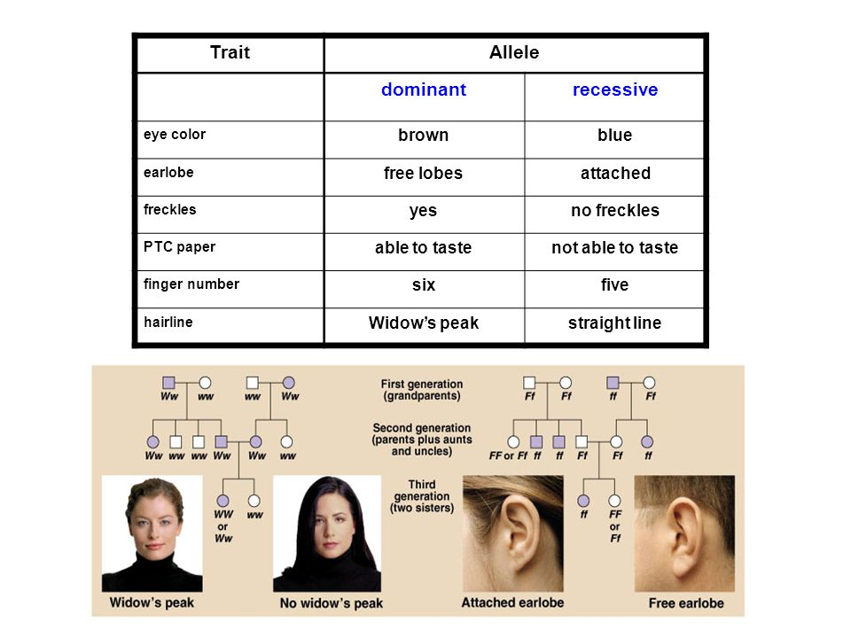Trait Allele dominant recessive