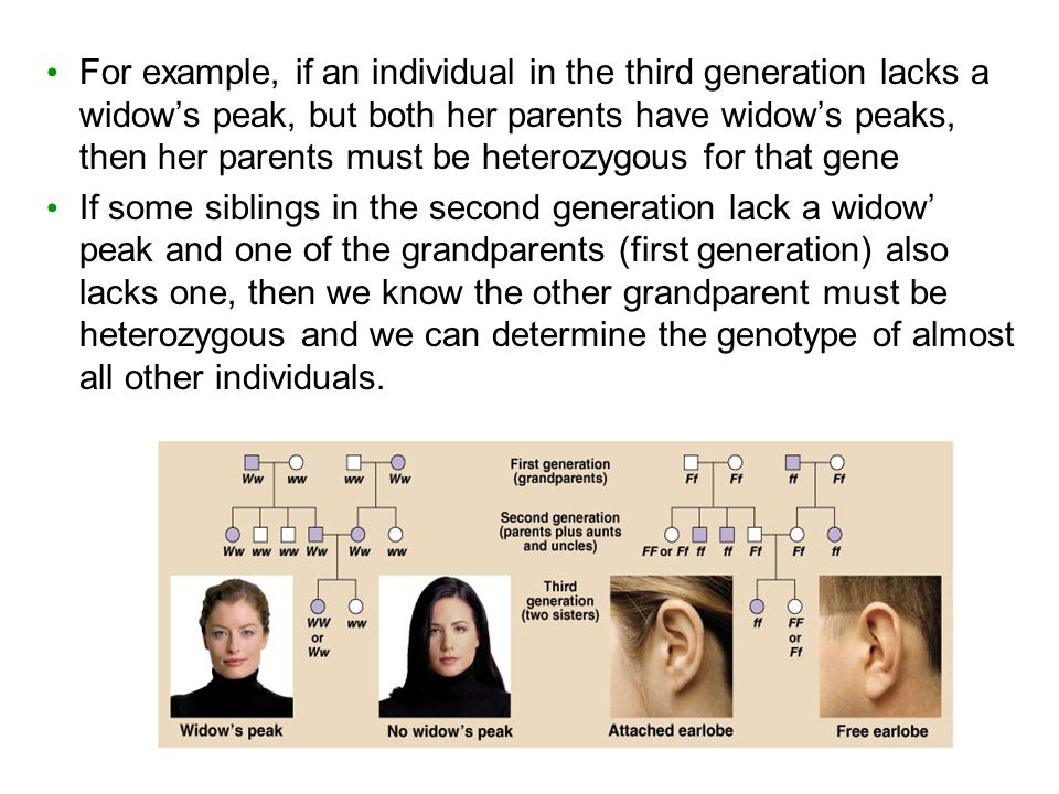 For example, if an individual in the third generation lacks a widow's peak, but both her parents have widow's peaks, then her parents must be heterozygous for that gene