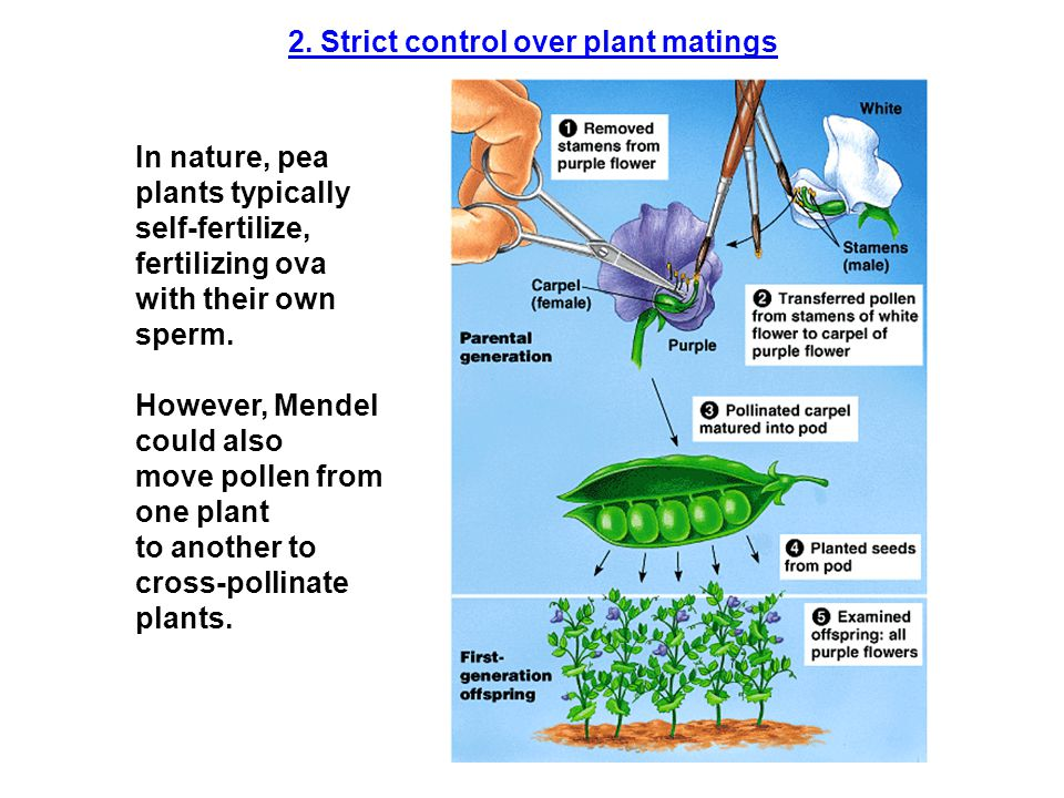2. Strict control over plant matings
