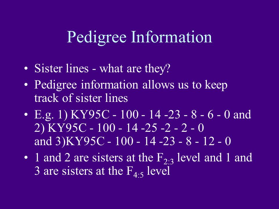 Pedigree Information Sister lines - what are they