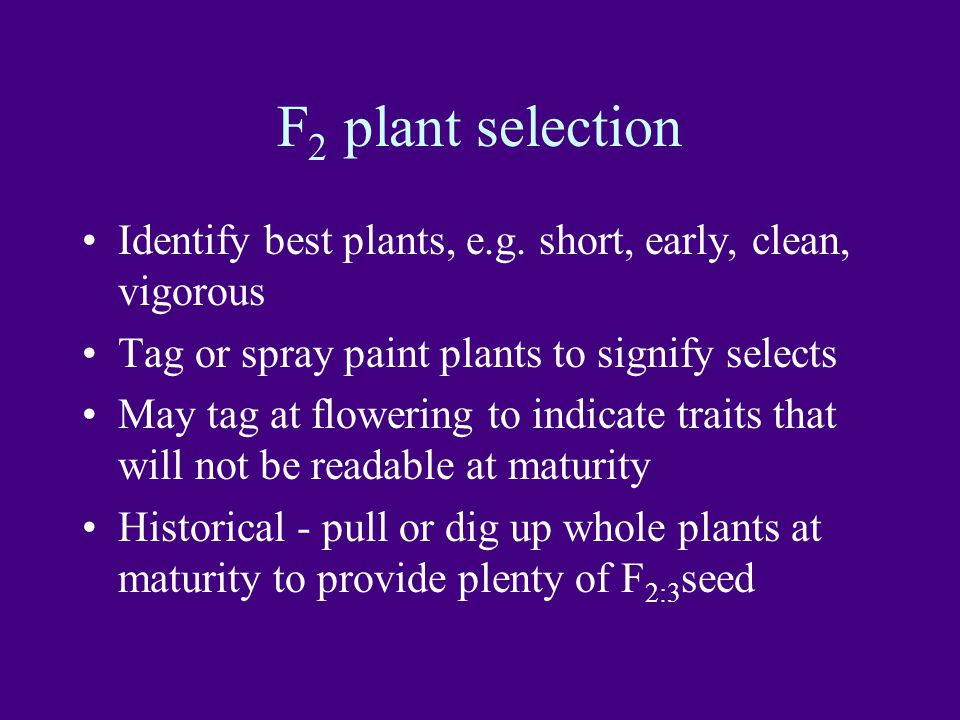 F2 plant selection Identify best plants, e.g. short, early, clean, vigorous. Tag or spray paint plants to signify selects.