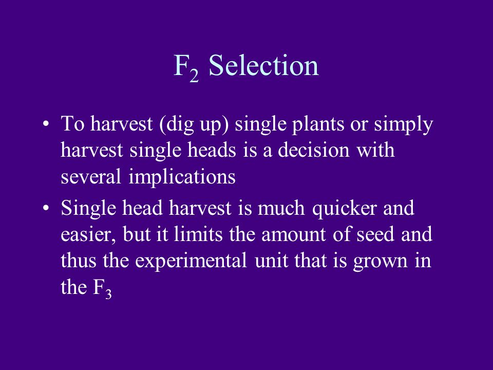 F2 Selection To harvest (dig up) single plants or simply harvest single heads is a decision with several implications.