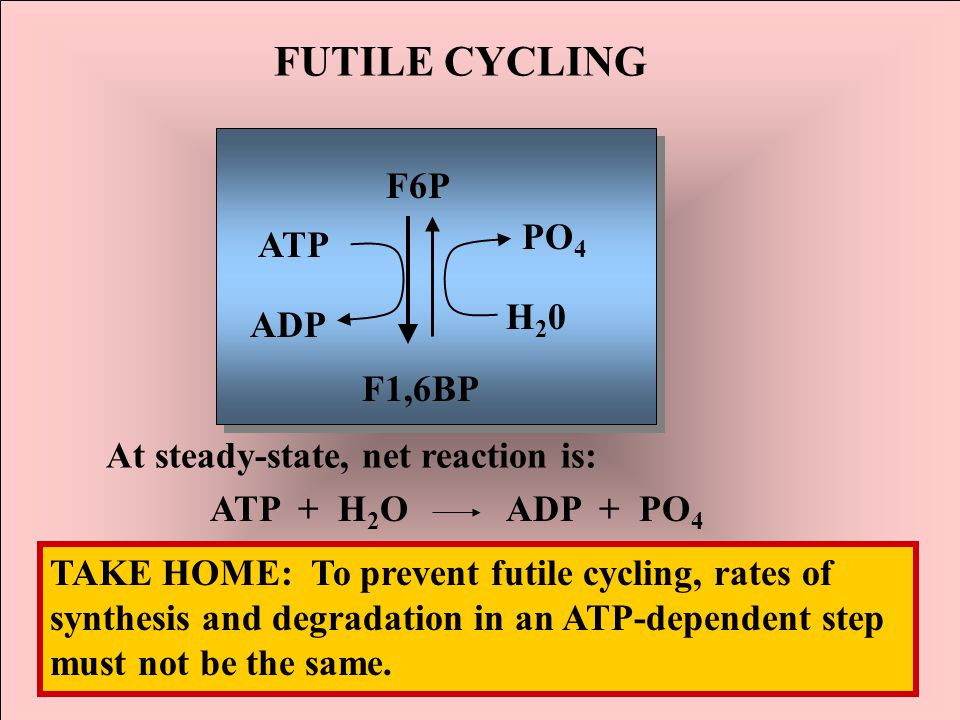 FUTILE CYCLING F6P PO4 H20 ATP ADP F1,6BP