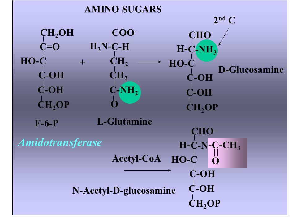 Amidotransferase AMINO SUGARS 2nd C CH2OH C=O HO-C CH2OP C-OH F-6-P