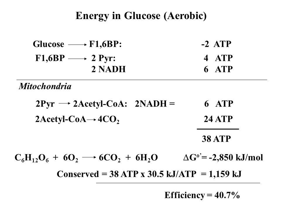 Energy in Glucose (Aerobic)
