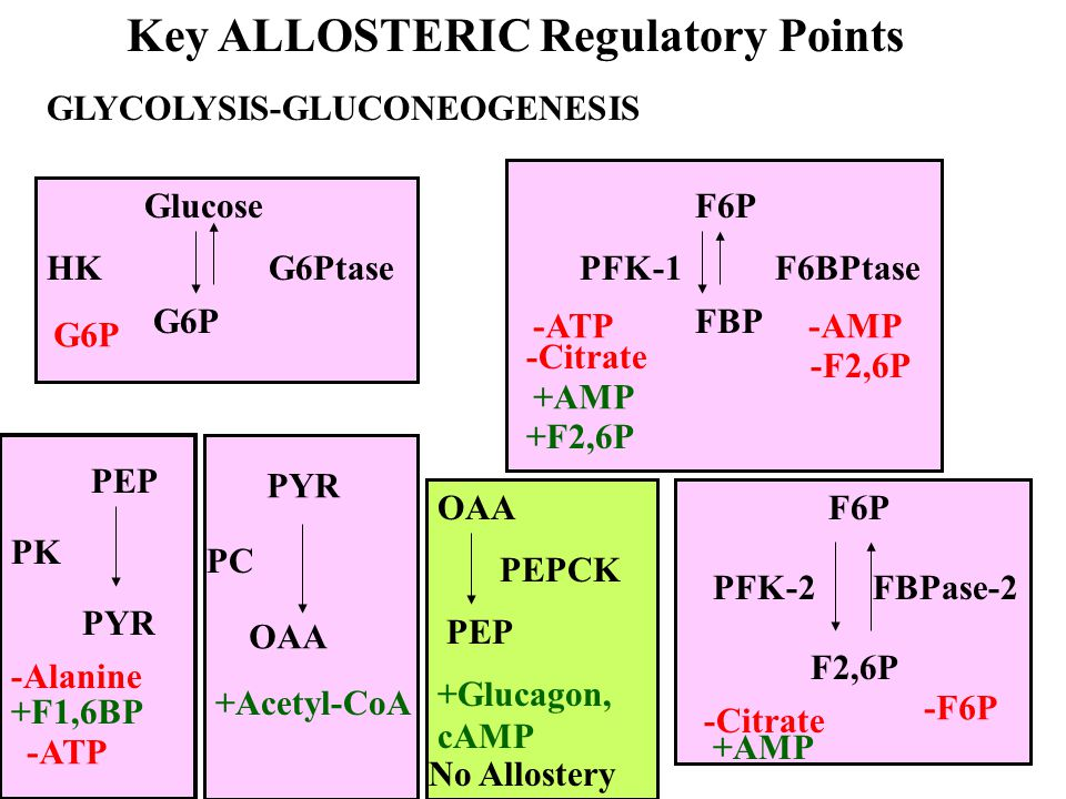 Key ALLOSTERIC Regulatory Points