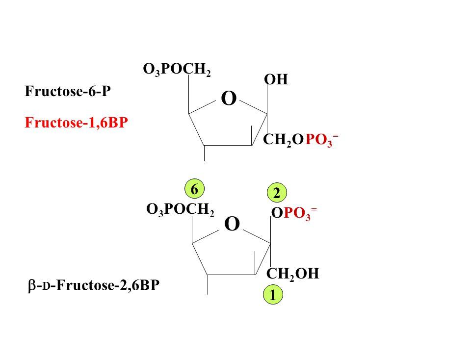 O O O3POCH2 OH Fructose-6-P Fructose-1,6BP PO3= CH2OH 6 2 OH CH2OH
