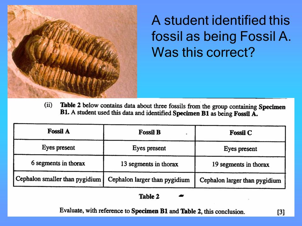 A student identified this fossil as being Fossil A. Was this correct