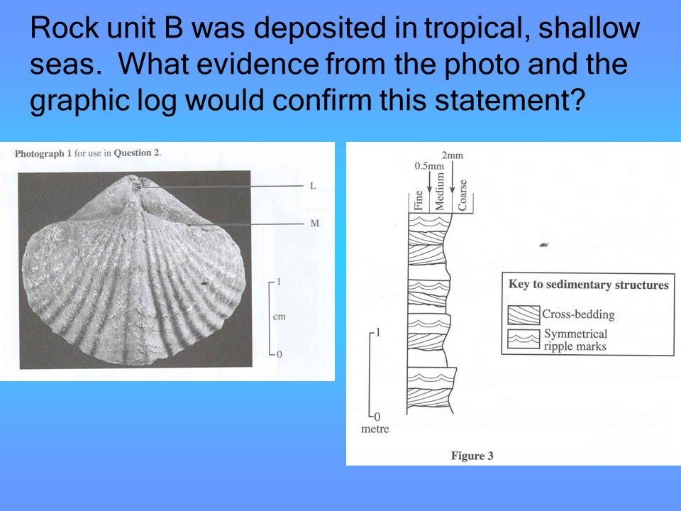 Rock unit B was deposited in tropical, shallow seas