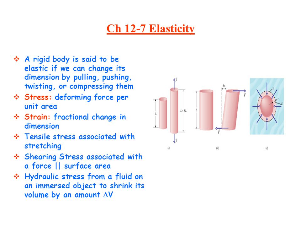 Ch 12-7 Elasticity A rigid body is said to be elastic if we can change its dimension by pulling, pushing, twisting, or compressing them.