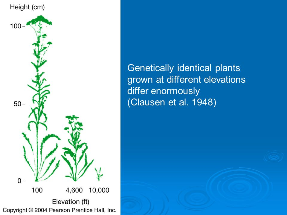 Genetically identical plants