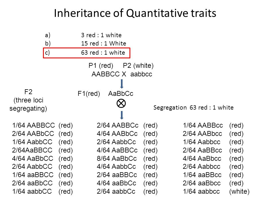 Inheritance of Quantitative traits