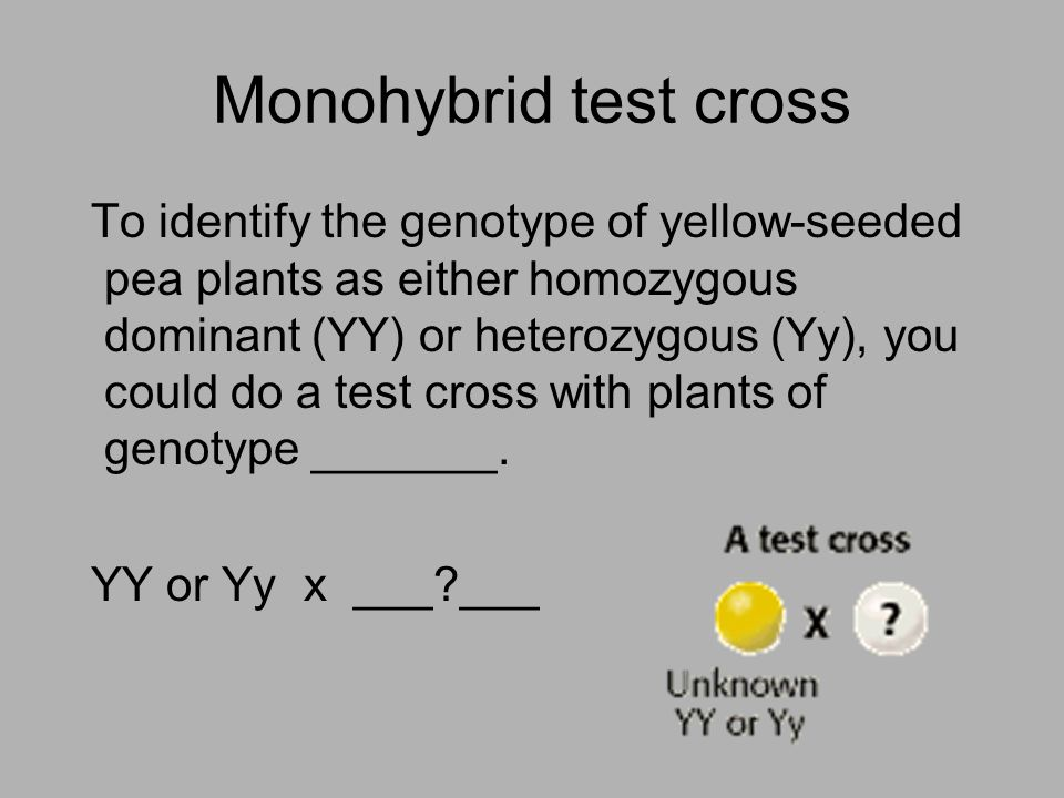 Monohybrid test cross