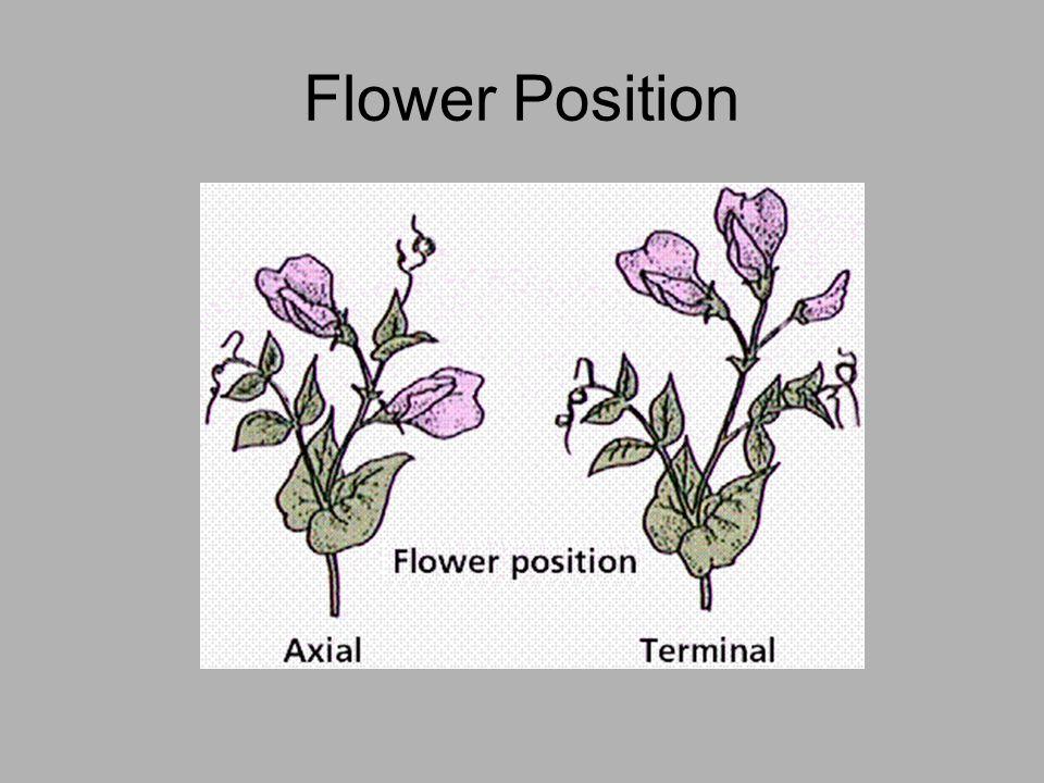Flower Position