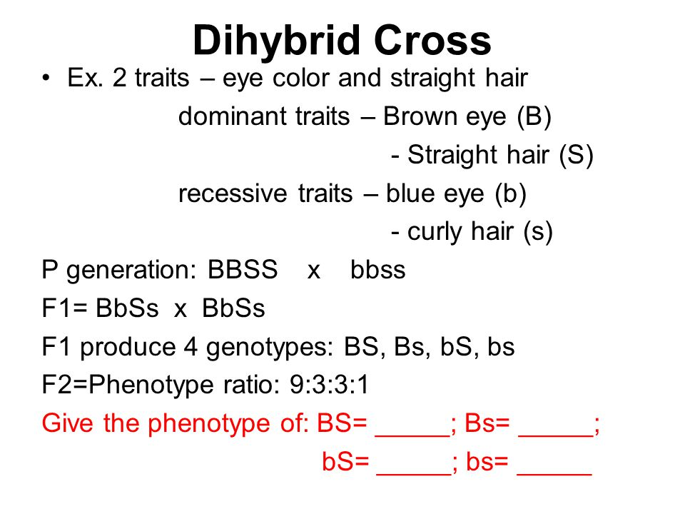 Dihybrid Cross Ex. 2 traits – eye color and straight hair