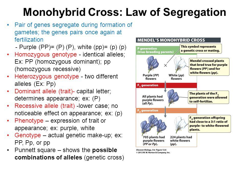 Monohybrid Cross: Law of Segregation