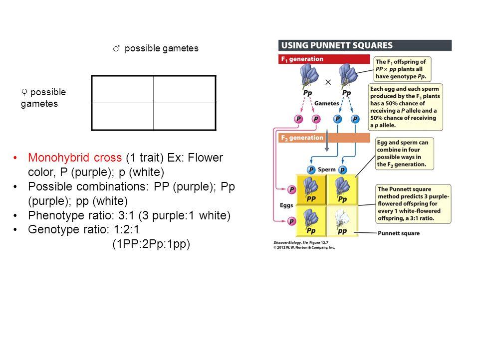 Monohybrid cross (1 trait) Ex: Flower color, P (purple); p (white)